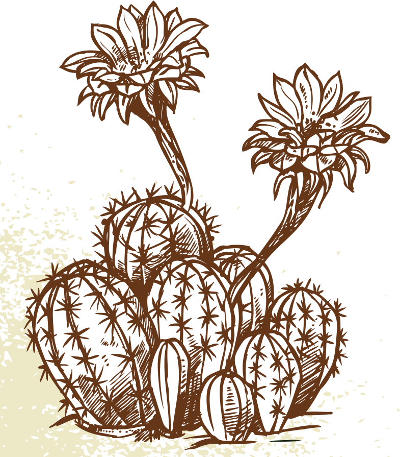 cactus_flower.png